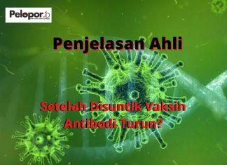 Antibodi